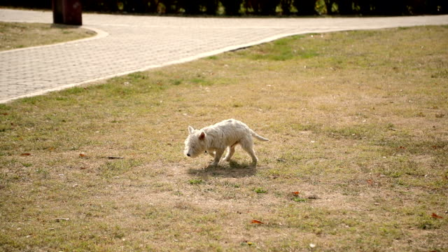 Dog making a poop on grass