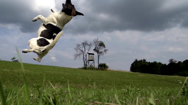HD SUPER SLOW-MO: Dog Missed The Ball video
