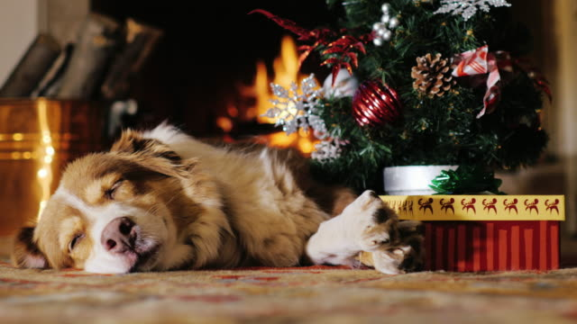 Dog napping near a Christmas tree with a gift. burning fireplace in the background. Concept: warmth and happy Christmas video