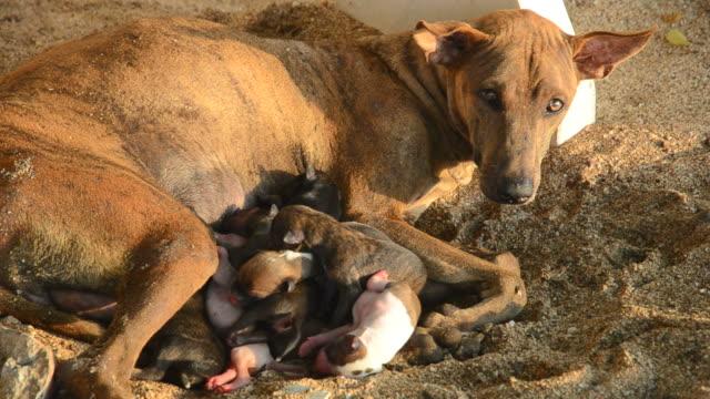 Cachorros recién nacidos de la enfermería de perro - vídeo