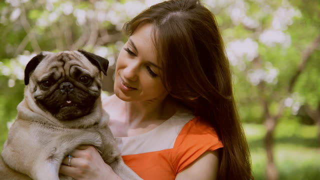 Dog of the Pug breed. A girl is walking a dog on a green lawn. video
