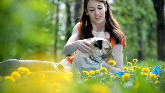 Dog of the Pug breed. A girl is walking a dog on a green lawn. Dog of the Pug breed. A girl is walking a dog on a green lawn. videos of dogs mating stock videos & royalty-free footage