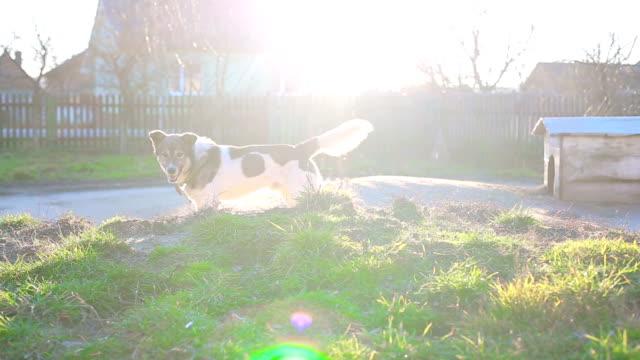 A dog on a chain beautiful sunshine