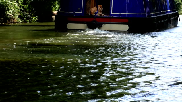 狭い運河のボートに乗って犬 - はしけ点の映像素材/bロール