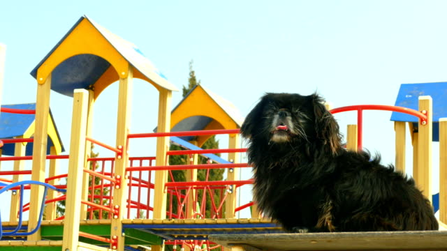 Bидео dog on the background of an empty playground