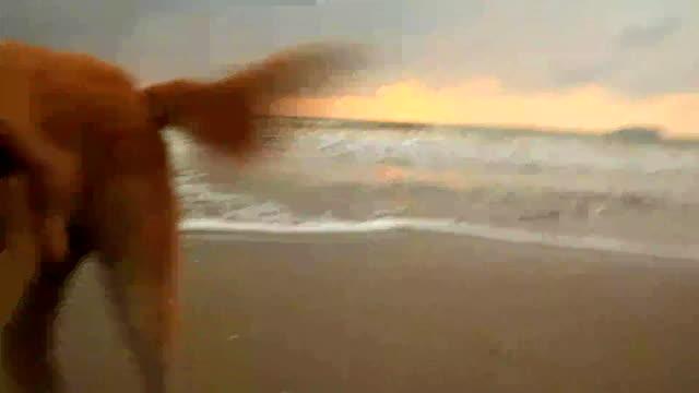 Dog on the beach. - vídeo
