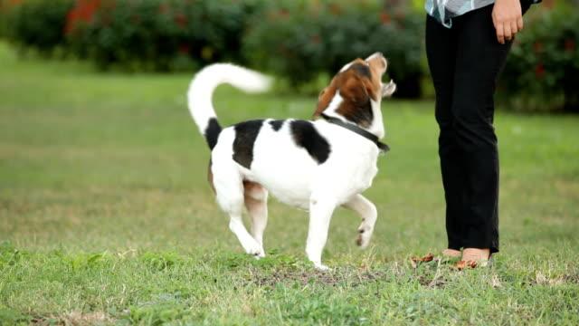 cane su due gambe - cane addestrato video stock e b–roll