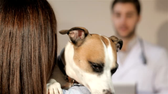 hund öppnar sin mun på axeln av sin ägare - veterinär, undersökning bildbanksvideor och videomaterial från bakom kulisserna
