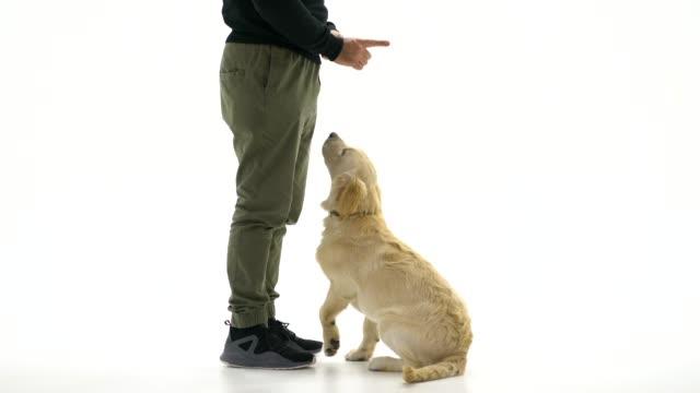 vídeos y material grabado en eventos de stock de dueño de perro enseñando a su perro - training
