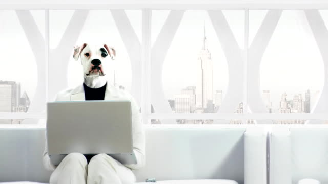 Dog People Business Texting video
