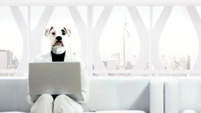 собака человек бизнес, удобные для использования смартфонов - сюрреалистический стоковые видео и кадры b-roll