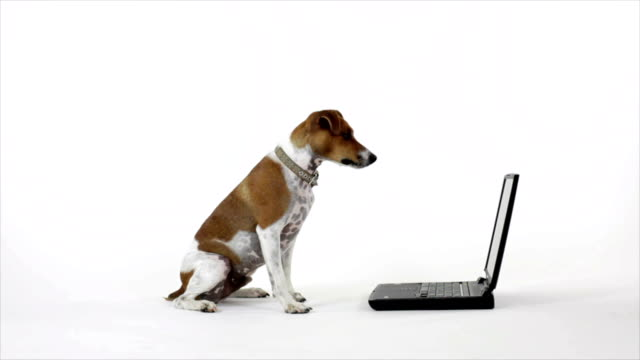 Dog Reading The Laptop video
