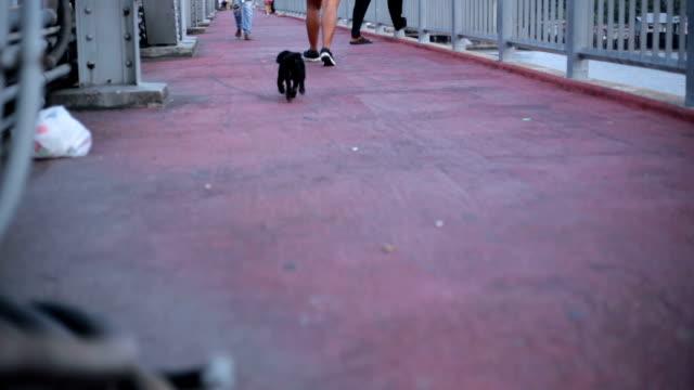 cane corsa. - cane addestrato video stock e b–roll