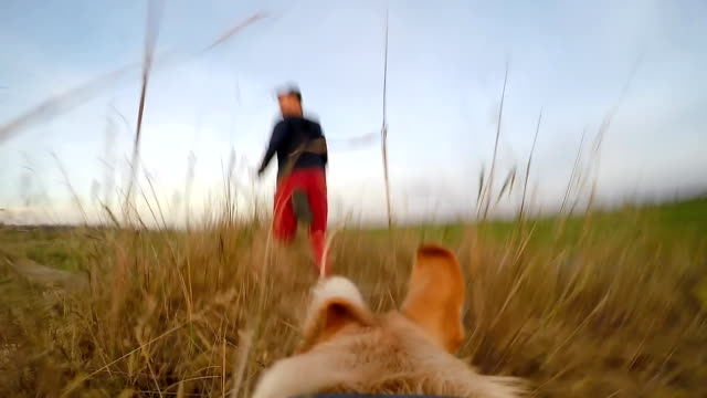 stockvideo's en b-roll-footage met slo mo pov dog running after his owner - gopro