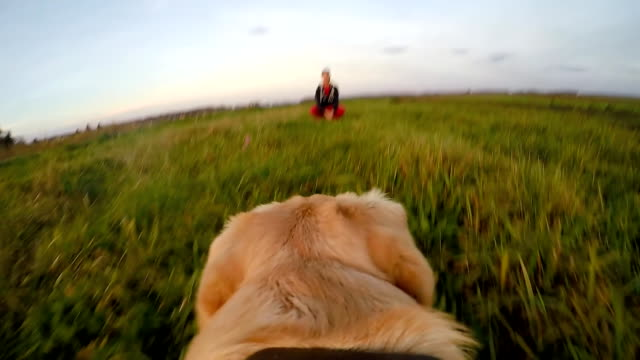 stockvideo's en b-roll-footage met slo mo pov dog running back to his owner - gopro