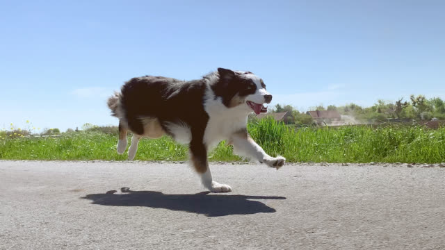Dog running fast on road