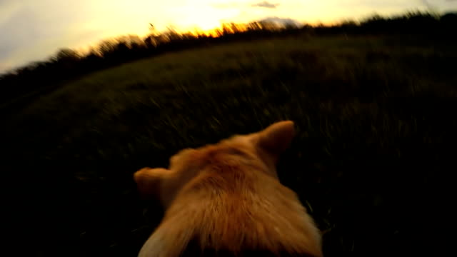 SLO MO POV Dog Running For A Stick video