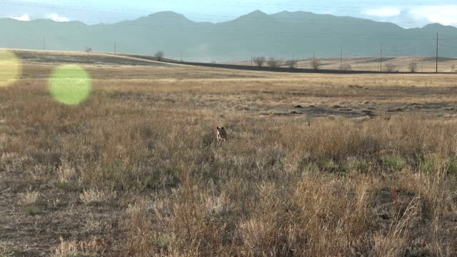 Dog Running In The Field video