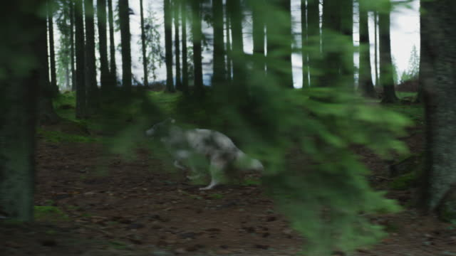 Dog running into the forest