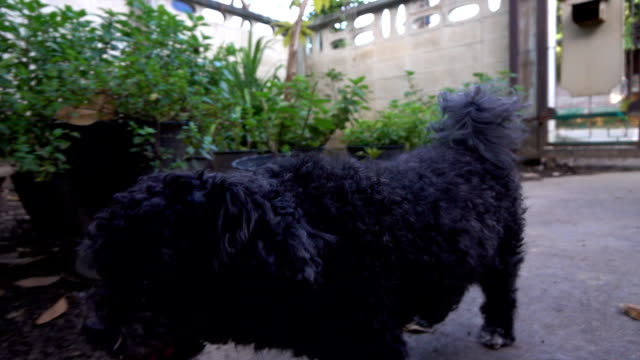Dog running, Slow motion video