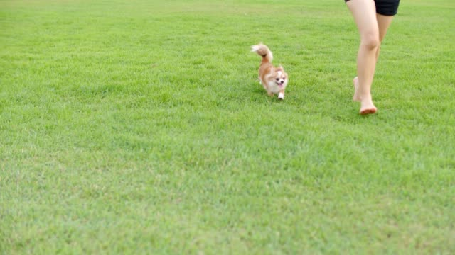 Dog running with joy video