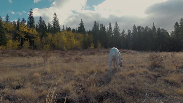 vídeos de stock, filmes e b-roll de cães pesquisa em torno de um campo - aspen colorado