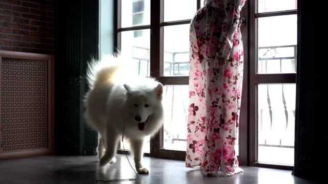 Dog, shaken off his fur at home video