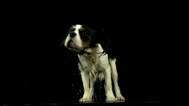 su sallayarak köpek - islak stok videoları ve detay görüntü çekimi