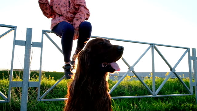Dog sits still on the grass near the highway. Woman is walking with a pet in the park at sunset, slow motion Dog sits still on the grass near the highway. Woman is walking with a pet in the park at sunset, slow motion. irish setter stock videos & royalty-free footage