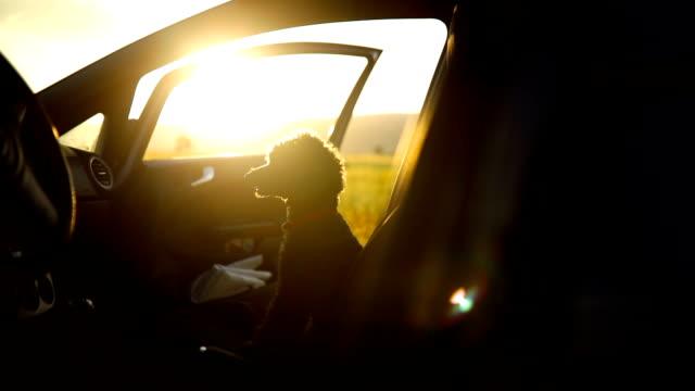 Dog sitting in car looking away