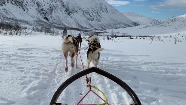 slittino per cani in norvegia - cane husky video stock e b–roll