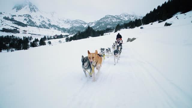 slittino per cani in montagne innevate. i cani husky corrono verso di noi con neve e montagne su tutto l'orizzonte 4k - cane husky video stock e b–roll