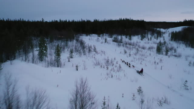 dog sledding on deep snow forest in aerial view - cane husky video stock e b–roll