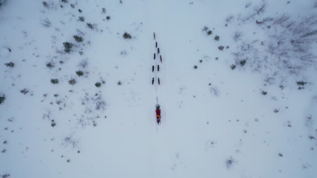 dog sledding on deep snow forest in top view - cane husky video stock e b–roll