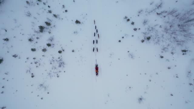 トップビューの深い雪の森で犬ぞり - イヌ科点の映像素材/bロール