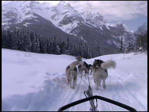 Dog Sledding Through Snow video