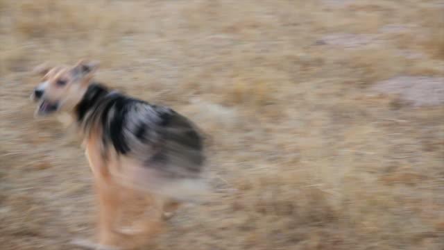 vídeos de stock, filmes e b-roll de cão de spinning-perro dando vueltas - cão