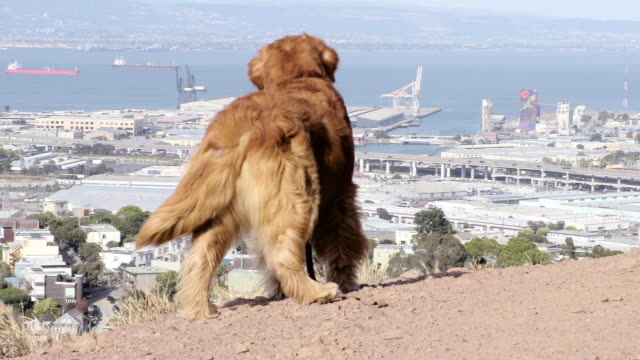 Dog standing over San Francisco video