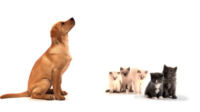 Dog stands and five cute kittens relax video