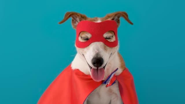 hund superhjälte kostym - superhjälte isolated bildbanksvideor och videomaterial från bakom kulisserna