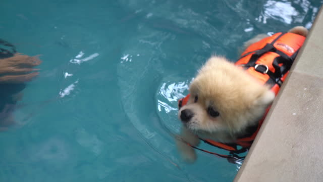 dog swimming in pool video