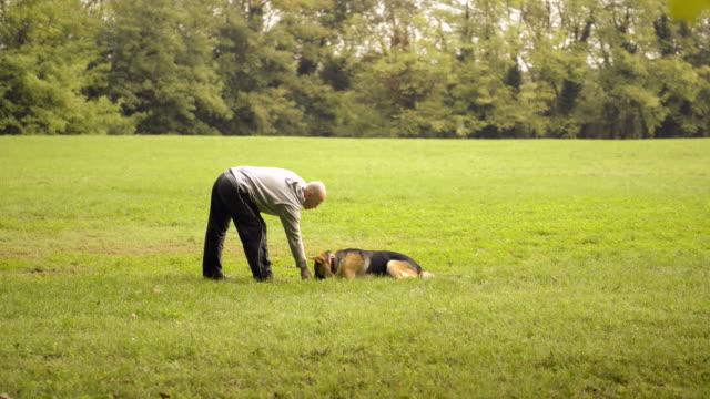 cane trainer nutrizione e facendo esercizio fisico con pastore tedesco - istruttore video stock e b–roll