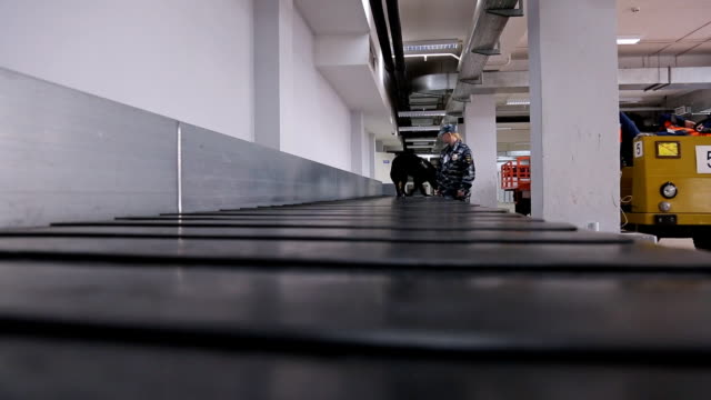 Dog training dog airport checks luggage carousel video