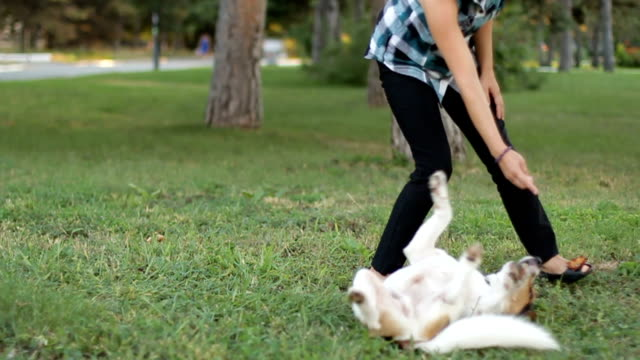 Dog training Young girl are trained little dog in the park. workshop stock videos & royalty-free footage