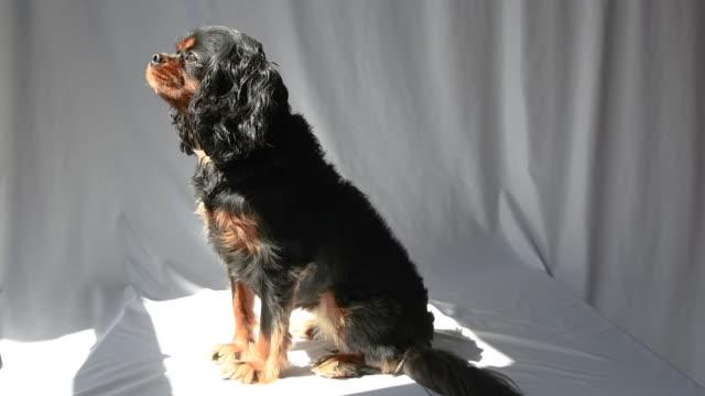 Dog turning to the sun slow motion