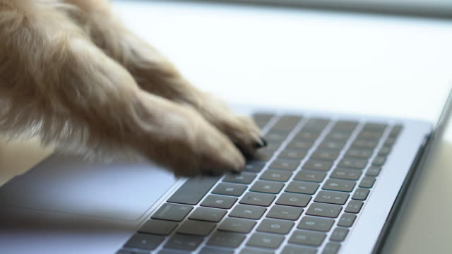 dog typing keyboard - arto inferiore animale video stock e b–roll