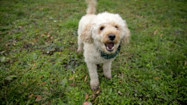犬  - 犬点の映像素材/bロール