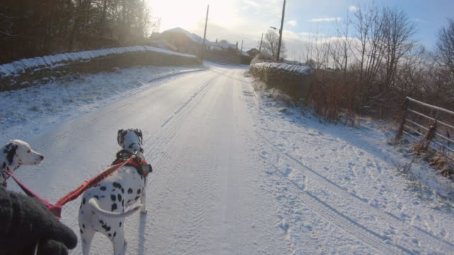 Dog Walk Down a Snow Covered Road