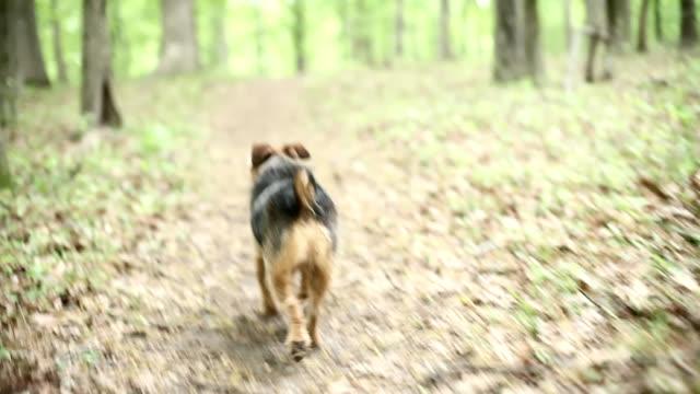 dog walking away - uzun adımlarla yürümek stok videoları ve detay görüntü çekimi