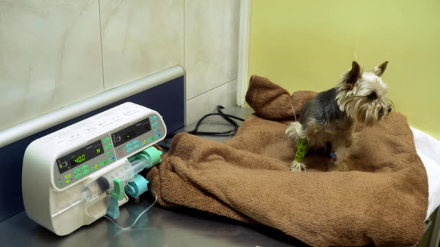 Dog with a catheter in a vet at the clinic video
